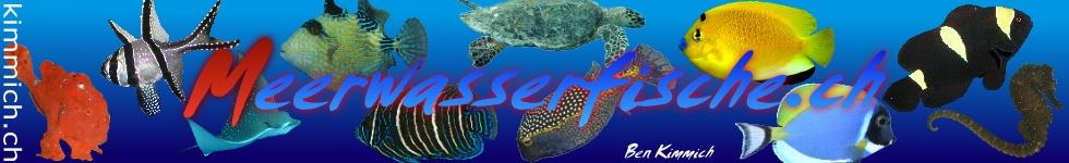 Meerwasserfische.ch