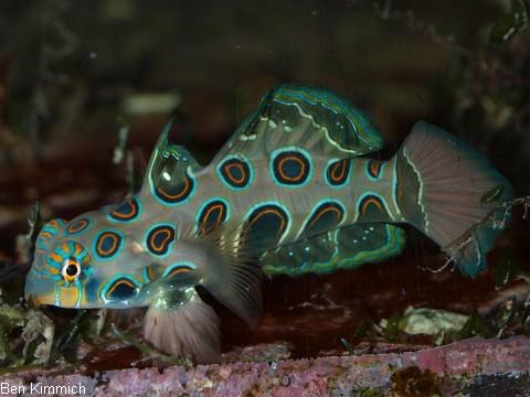 Seepferdchen auf for Fressen kois kleine fische